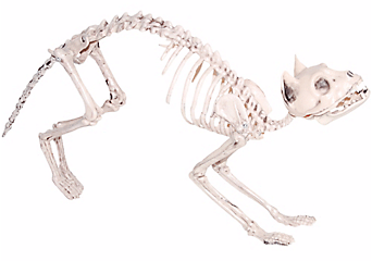 skeleton cat decorations